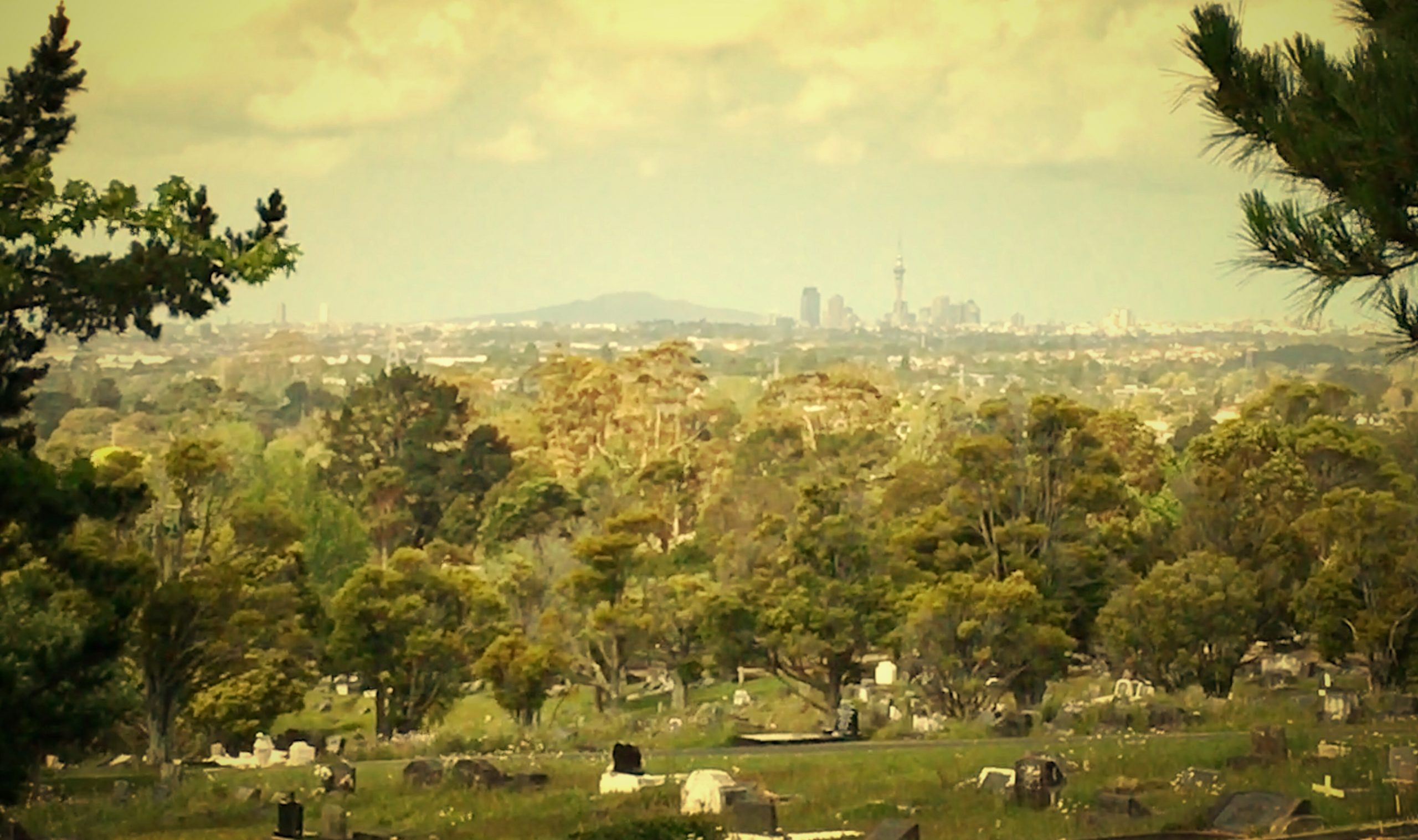 Auckland City from Waikemete Cemetry